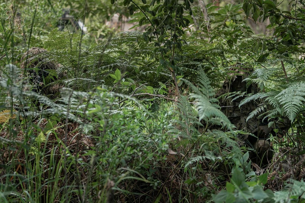 Soldiers from the 8th/9th Battalion, Royal Australian Regiment's Reconnaissance, Snipers and Surveillance Platoon demonstrate the use of camouflage and concealment in the Canungra Field Training Area. Photo: Private Jacob Hilton
