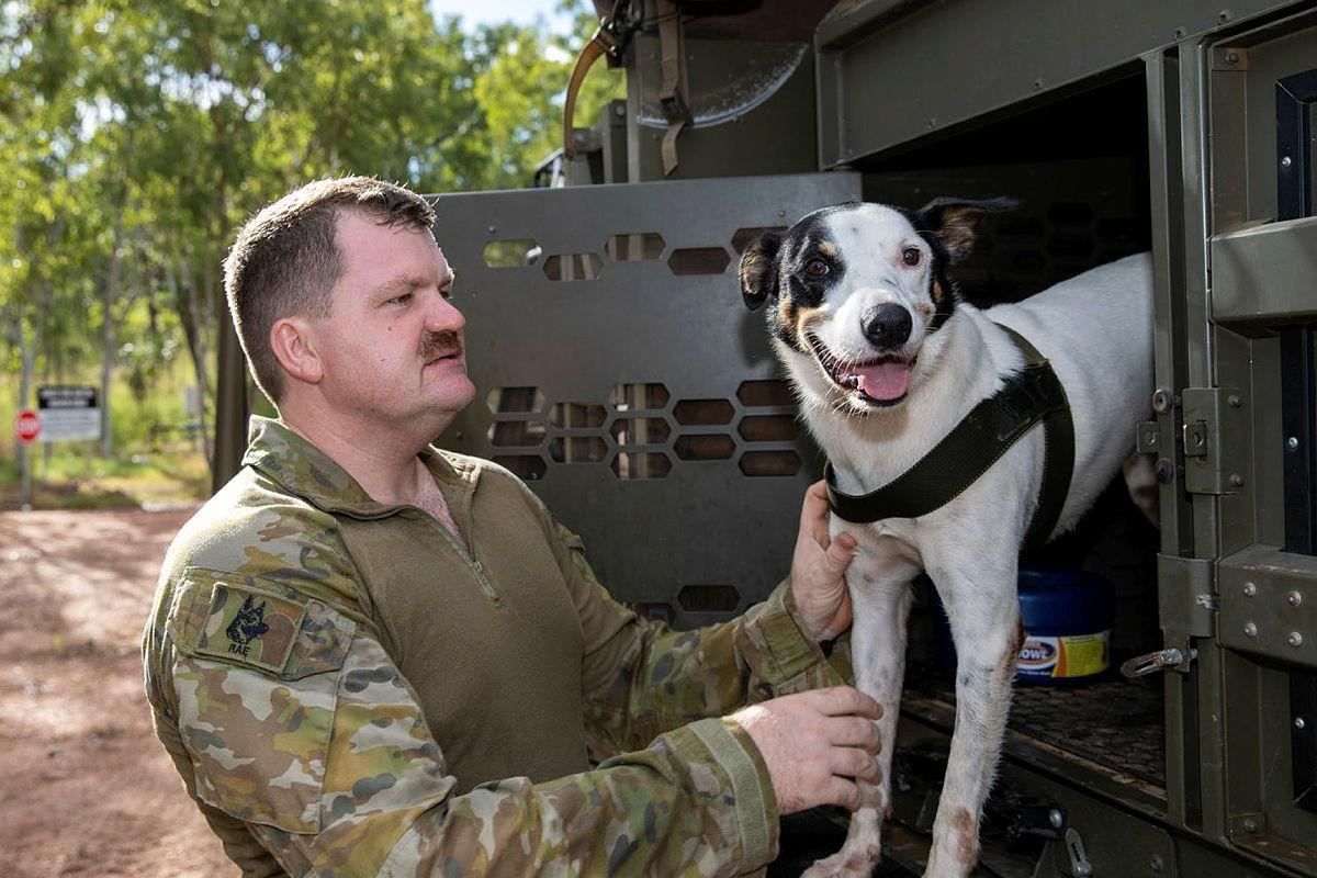 Explosive Detection Dog, Cheese, of the 1st Combat Engineer Regiment, and his handler Sapper Luke Saxton prepare for a search task during training at Kangaroo Flats Training Area, NT. Photo: Corporal Rodrigo Villablanca