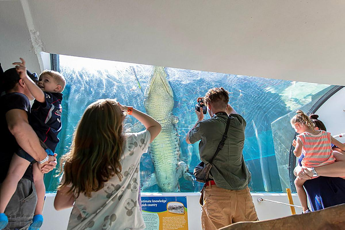 Visitors to Defence Community Organisation Crocosaurus Cove family day watch a saltwater crocodile swim laps in its tank in Darwin. Photo: Private Jacob Joseph
