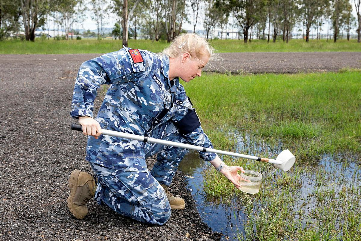 Air Force environmental health officer, Flying Officer Jamie Clifford from No 1 Expeditionary Health Squadron, looks for mosquito larva in samples of water during Exercise Regimen White 21 at RAAF Base Amberley. Photo: Leading Aircraftwoman Emma Schwenke